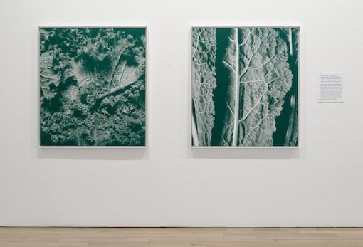 Kalochromes, Installationview James Cohan Gallery New York